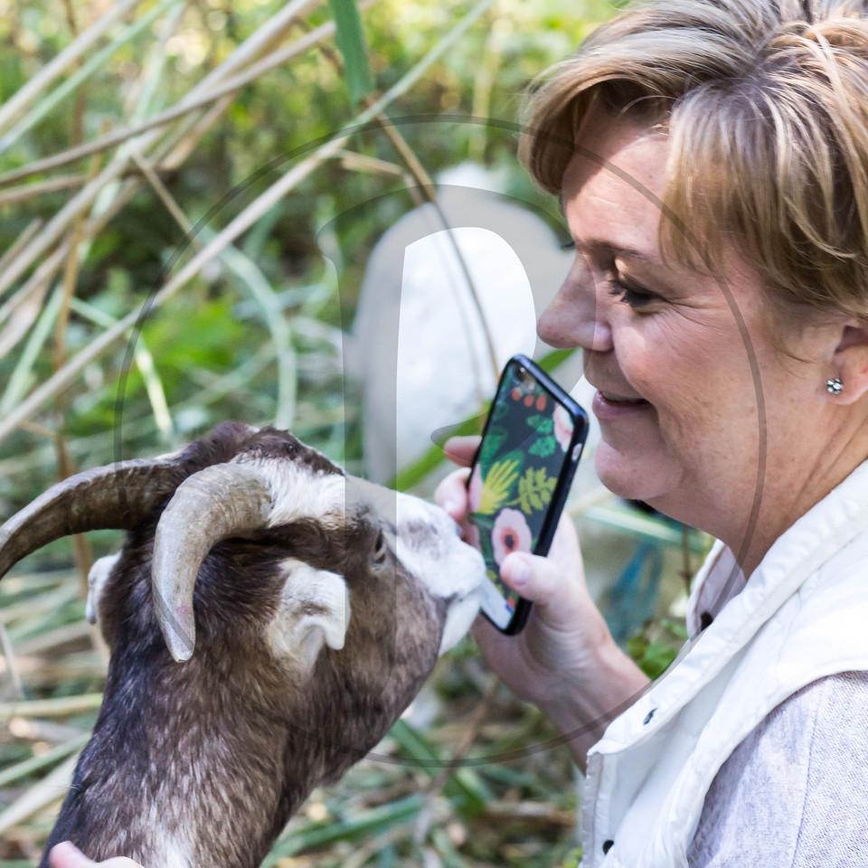 Goats-125