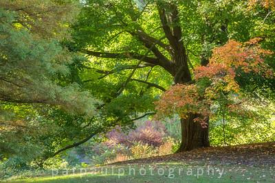 Reeves-Reed Arboretum, Summit, NJ