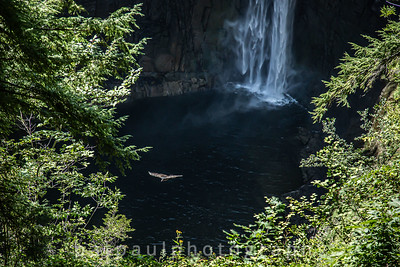 Raptor Flying Over Taughannock Falls