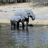 Elephant Baby & Mother by the Ater