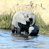 Elephant Mother & Baby in the River