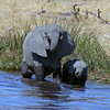 Elephant MOther & Baby Drinking
