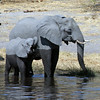 Elephant Mother & Baby Drinking from the River