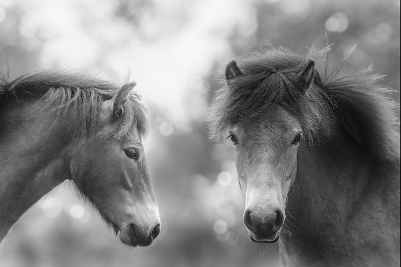 Wild Horse Poetry