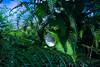 Good Morning Sunshine | Flower Wakes Up at Sunrise in the Morning Hidden in Fern Ferns Vaarn Vaarns Akkerwinde Bloem