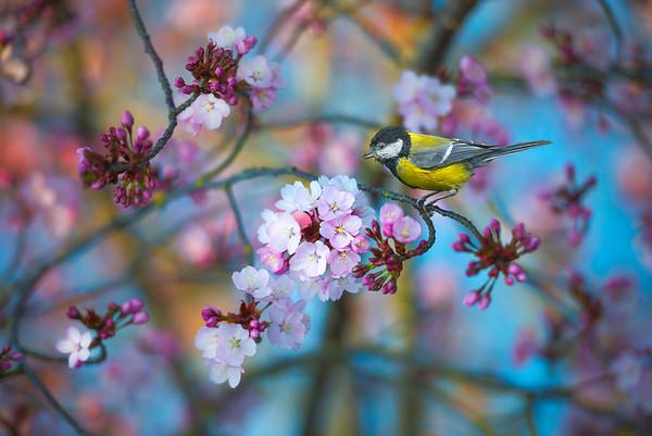 Heavenly Spring