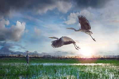 Wetland Blues | Blue Flying Heron Netherlands Blauwe Reigers Vliegen in de Blauwe Lucht Water Grasland Maashorst Vogels Natuurfotografie