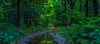 Splash of Light | Return of the Sun after the Rain in the Forest Warm Spot in the Distance Attracts and Guides Along Down Lushy Green Lush Path  Maashorst Bos Na Regen Komt Zon Zonneschijn Panorama Foto Bos Wand Groot Beeld Poster Decoratie Kamer Inspiratie Rust Dromen Licht Reflectie Bladeren Zonlicht
