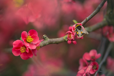 The Beauty of Blossom's