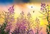 Aurora Musis amica | Early Morning Bird Birds