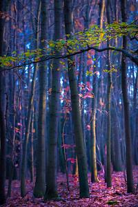 Florest Emagico