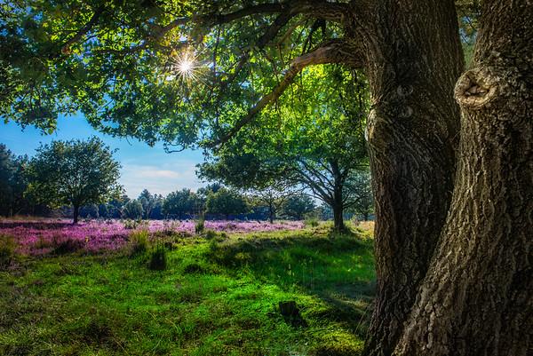 Summer Heath