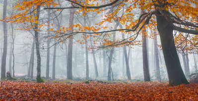 Woods of Fall