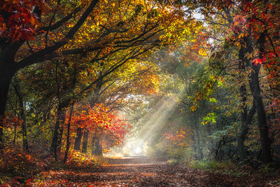 Falling in Color | Beautiful Autumn Scene Forest Path wrapped in a Dreamy Morning Fog Enlighted with Beams of Sunrays Guided by Colorful Red Yellow Green Trees Fallen Leaves Taking You On A Journey into a Mystery Fairy Tale  Life Maashorst Ochtendmist