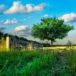 Entrance Gate to the Pastel Lands | A Land where the Plants the  Flowers and the Trees have No Name A Land where Summer lasts a thousand 1000 years Brabant Dutch Holland the Land of Vincent  ...