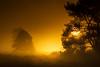 A new day | Sunrise Maashorst over Misty Heath Field