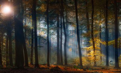 Blue Earth | Golden Delight on the Red Carpet Poëtisch Herfstbos Ochtendgloren Zonnestralen Autumn Forest