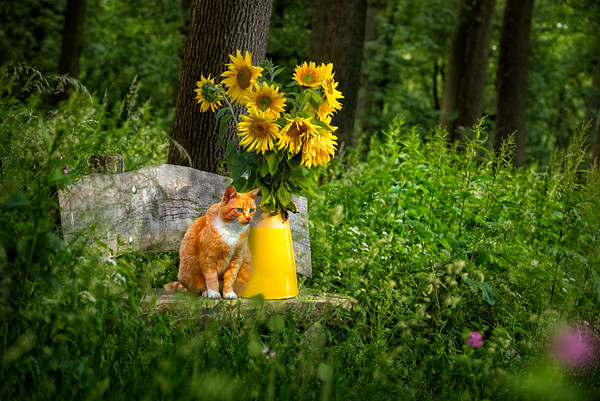 Be You Tiful | Be Beautiful Be You Quote and Image by OXOVISUALS Red Haired Cat with Blue Eyes Sitting on Wooden Bench Next To Yellow Vase with Sunflowers in Green Forest