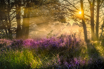 Paradise of Heather