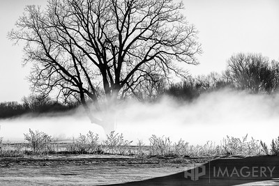 B&W - Foggy River Bottoms