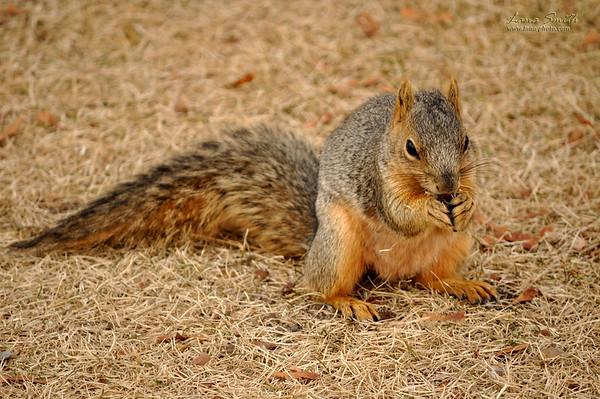 squirrel 2 sig