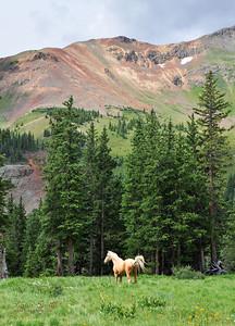 Horse ar Ophir Pass road sig