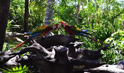 Parrots sig