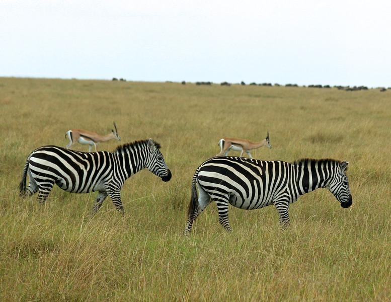 Zebras & Impalas