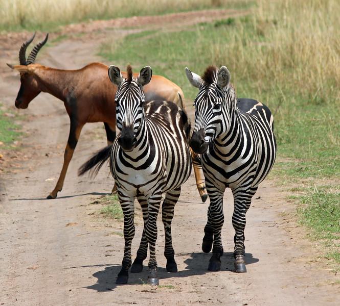 Zebras & Topi