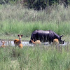 Rhinoceros & Deer