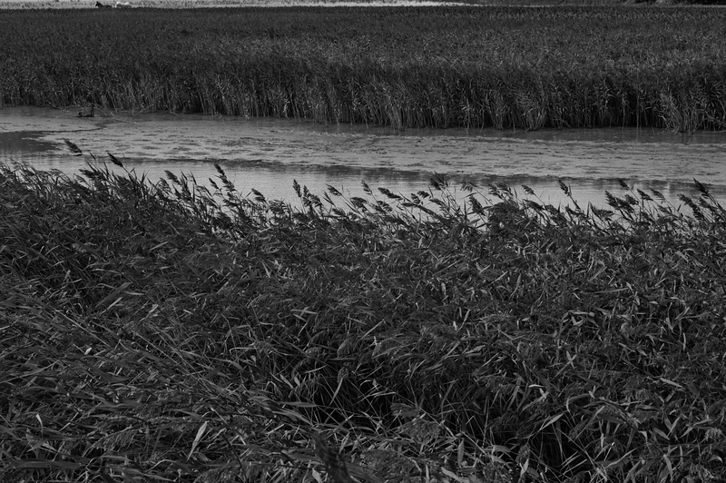 Grass -- Snape Maltings, England (September 2012)