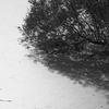 Pond - Hampstead Heath - London (Treatment 3)  (October 2013)
