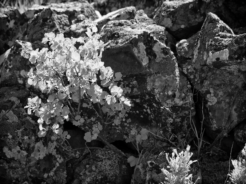 Leaves-Rocks -- Dry Falls State Park, Washington (May 2011