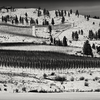 Vineyard in Winter -- Chelan, Washington (December 2010)