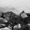 Marmot on Rocks -- Chelan, Washington (March 2010)