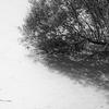 Pond - Hampstead Heath - London (Treatment 2) (October 2013)