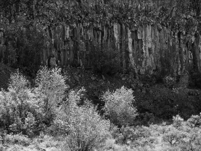 Bushes-Cliff -- Dry Falls State Park, Washington (May 2011