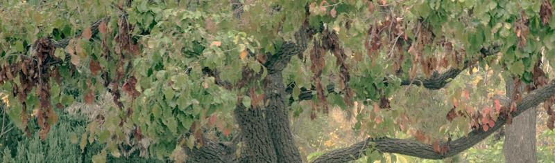 Gentle Tree