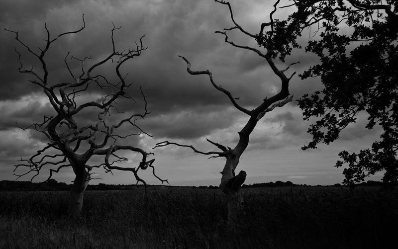 Trees -- Snape Maltings, England (September 2012)