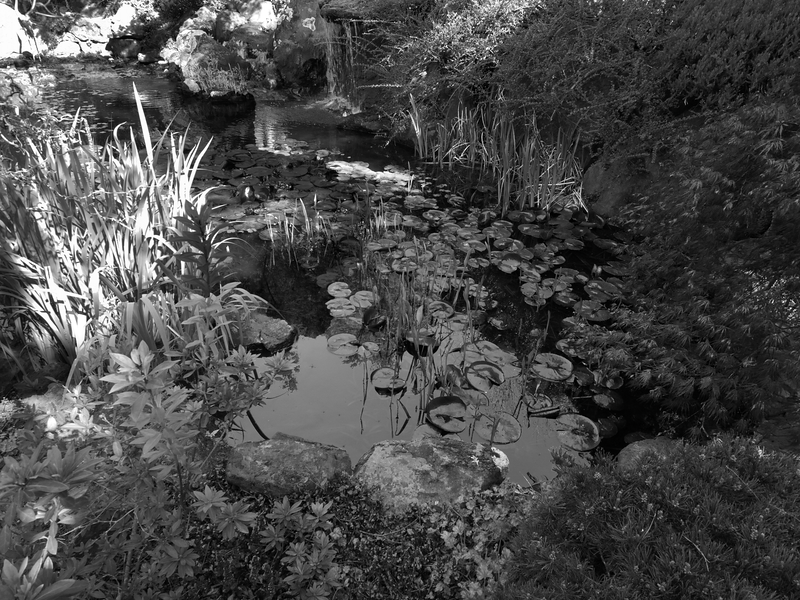 Pond -- Ferrari-Carano Winery, Healdsburg, California (April 2011)