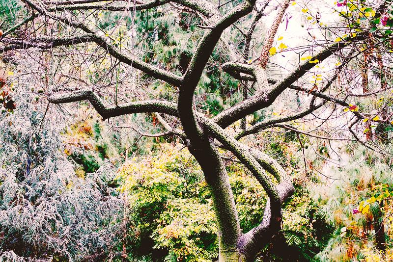 Dancing Tree 2
