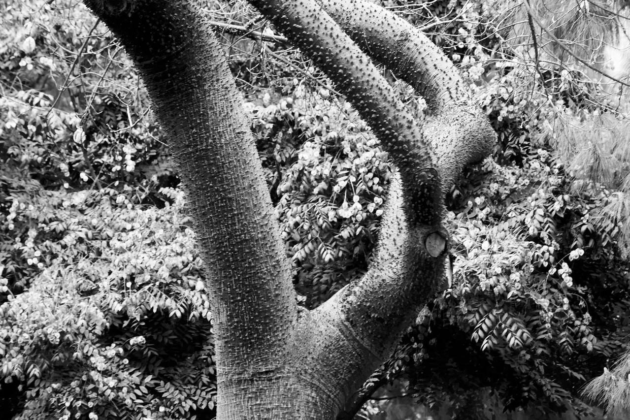 Tree's Hand