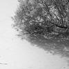 Pond - Hampstead Heath - London (Treatment 1) (October 2013)