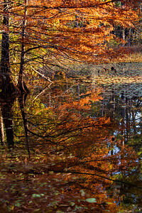 Perfect Reflection of Autumn
