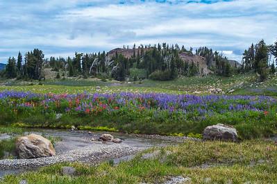 Meadow of wildflowers in bloom