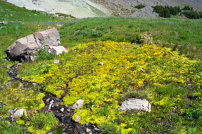 High meadow moss and blooms