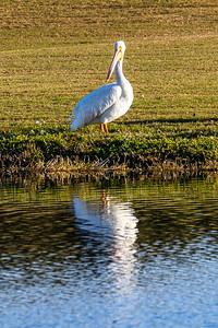 201230_10_FL_7291_Wildlife-2