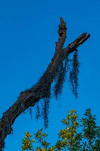 170327_058_FL_SawgrassPark-1
