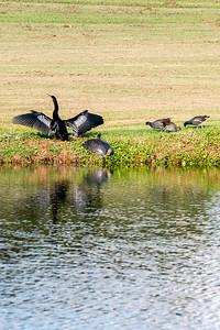 191102_15_FL_7291_Birds-1