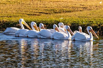 201230_03_FL_7291_Wildlife-2